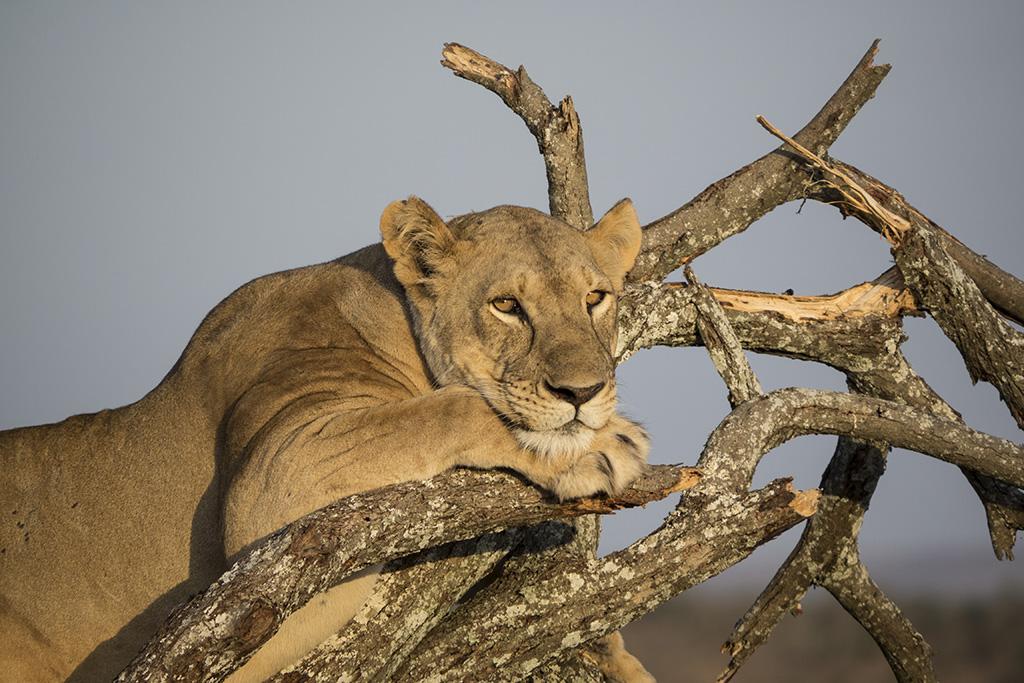 Naturreise Tansania, Aktivferien, Oktober 2016 © Valérie Chételat