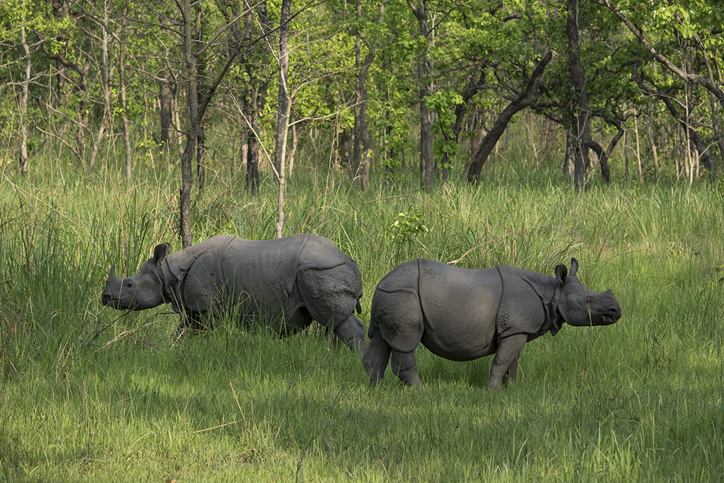 Rhino, Chitwan National Park. Everest Komfort Trekking, 27. April - 13. Mai 2017 © Valerie Chetelat
