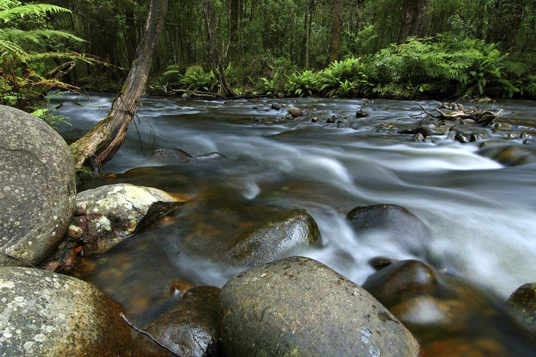 Little River near Taggerty, Victoria LIT1450 © Alison Pouliot